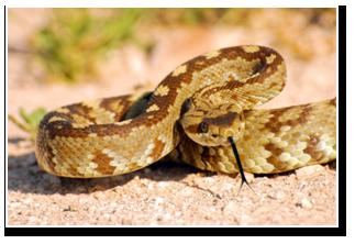 ular berbisa