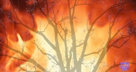 Brandende Bos