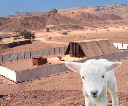 lamb and the tabernacle of meeting