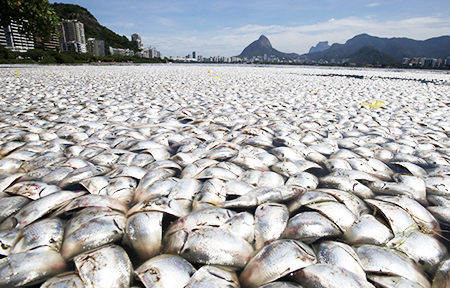 thousands of dead fish washed up on the sea shore