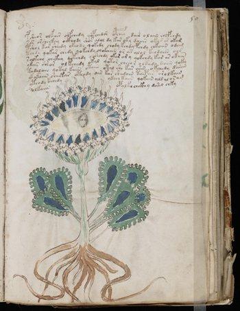 O Manuscrito de Voynich com uma de suas várias espécies de plantas não identificadas