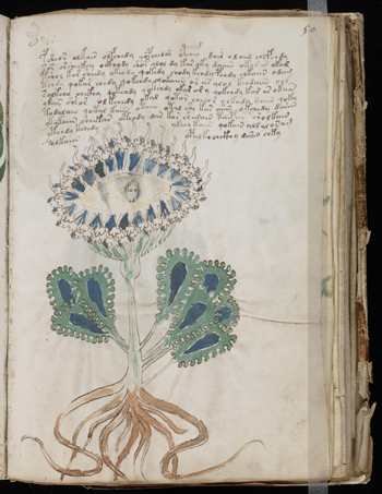 The Voynich manuscript with one of it's many unidentified plant species