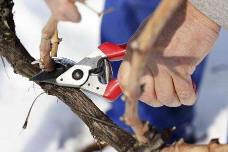 Beschnitt der Zweige