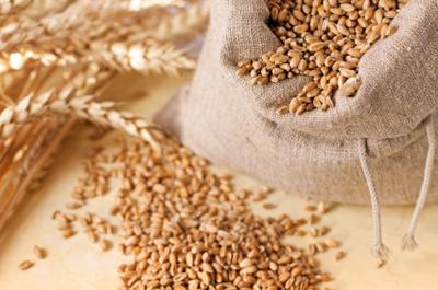 grains de blé - céréales - épis et sac de grains en toile