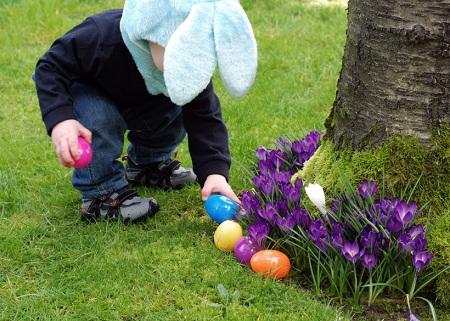 Enfant rassemblant des oeufs de Pâques (chasse aux oeufs de Pâques)
