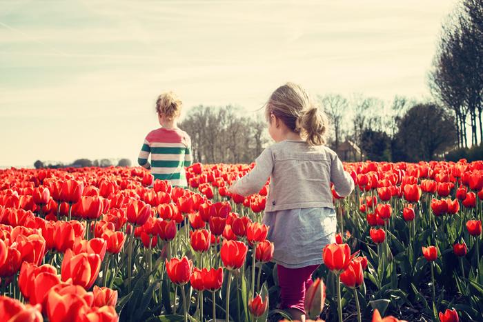Kinder im Tulpenfeld