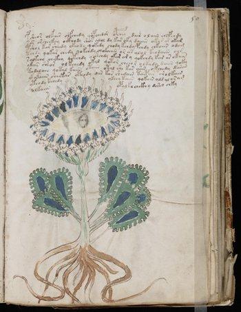 Ang manuskritong Voynich kasama ang isa ng marami nitong hindi pa nakikilalang klase ng halaman
