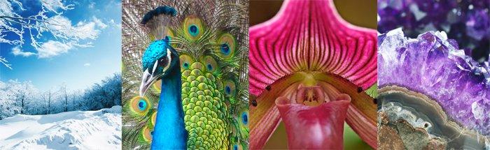 collage de la Création: scintillement de la neige fraîchement tombée, éclat du plumage d'un paon (bleu, vert, jaune, orangé); coloration délicate et variée d'une fleur, splendeur d'une pierre précieuse (améthyste: quartz violet)
