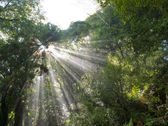 lumina solară