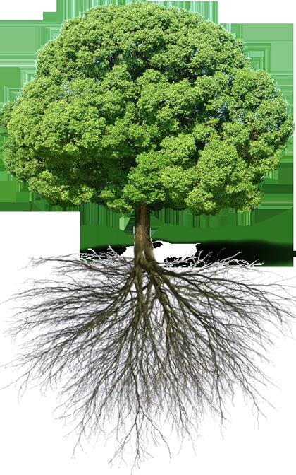 شجرة ذات جذور