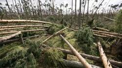 Poland storms kill six, destroy tens of thousands of trees