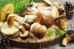 What You're Not Suppose To Know About Healing Mushrooms