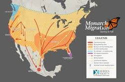 California's Monarch Butterfly Population Collapses By 86% In One Year