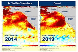 "Temperatures In The Pacific Ocean Have Shot Up To Dangerous Levels, And Scientists Are Blaming A ""Strange Anomaly"""