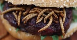 London Eatery Serving Up WORM BURGERS