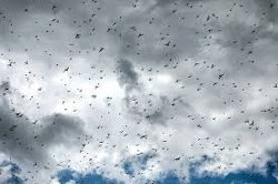 Largest Plague Of Locusts In A Quarter Century Hits Africa And Middle East