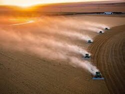 What Is Happening to the Farms Which Used to Feed the World?