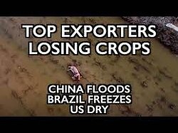 China Floods, Brazil Freezes, US Dry - Top Exporters Lose Crops as Grains Crisis Accelerates